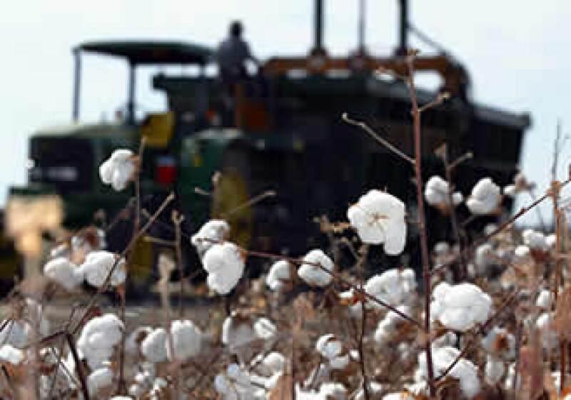 Las restricciones impuestas por India desde abril de 2010, han disparado los precios del algodón, ya que es el segundo mayor exportador de esta fibra a nivel mundial. (Foto: AP)