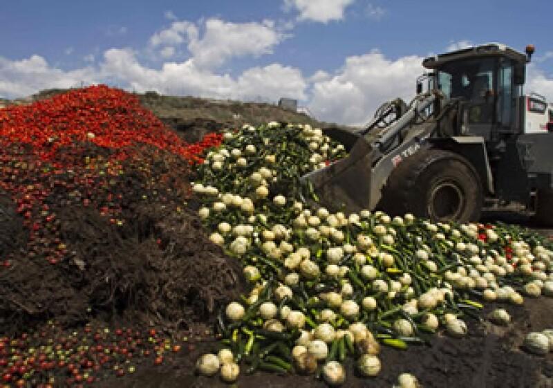 Los agricultores españoles estiman pérdidas por unos 200 millones de euros a la semana. (Foto: Reuters)