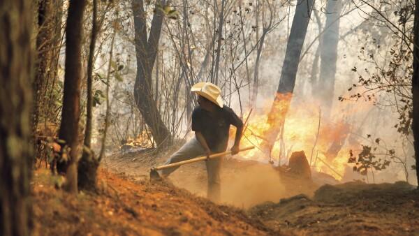 Recuperara los bosques para vivir