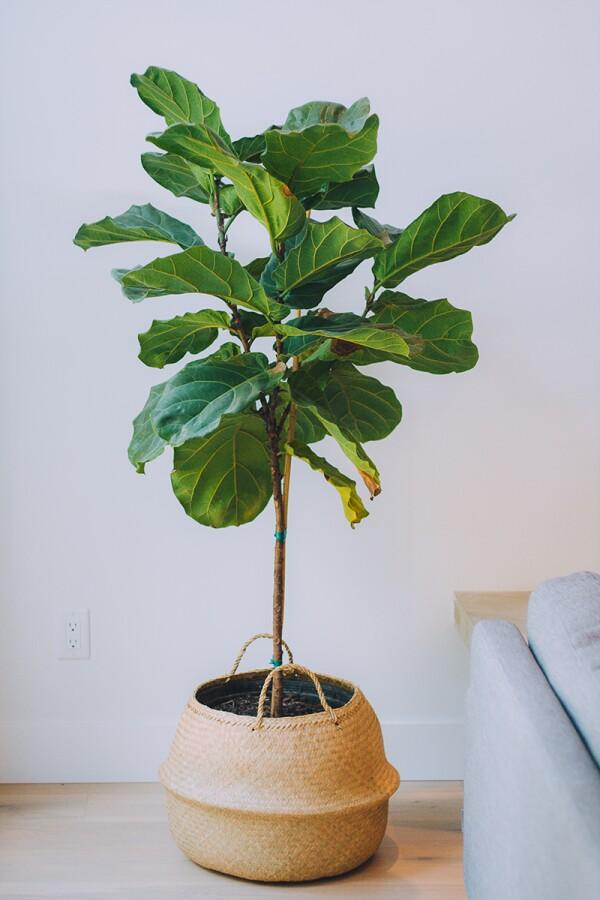 plantlady_1