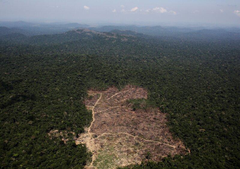 Brasil Amazonas deforestación