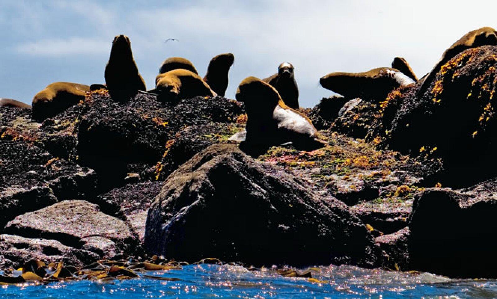 Son insuperables las actividades que se te presentan en este viaje desde la visita a un glaciar, el avistamiento de ballenas y lobos marinos hasta pesca en lagunas que ni siquiera tienen nombre.