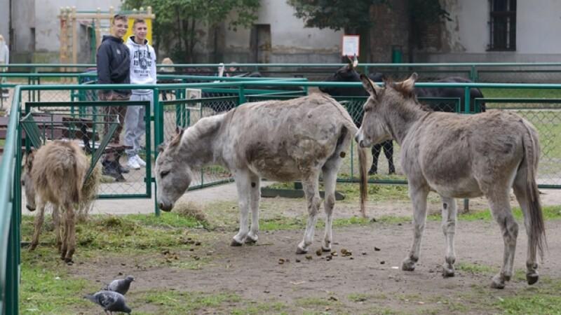 Zoológico Poznan burros pareja