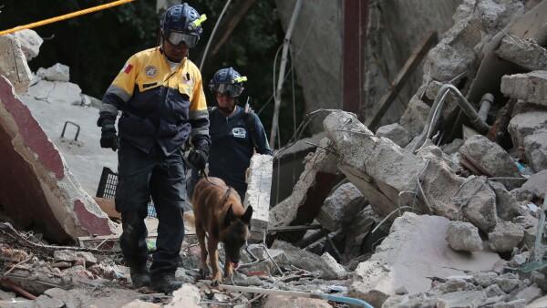 animales sismo ayuda