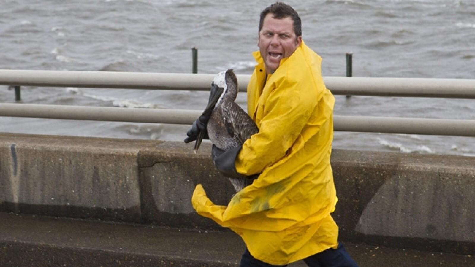 un trabajador rescata a un pelicano