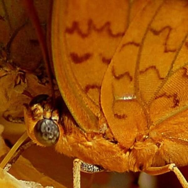 mariposas tanzania insectos especies 05