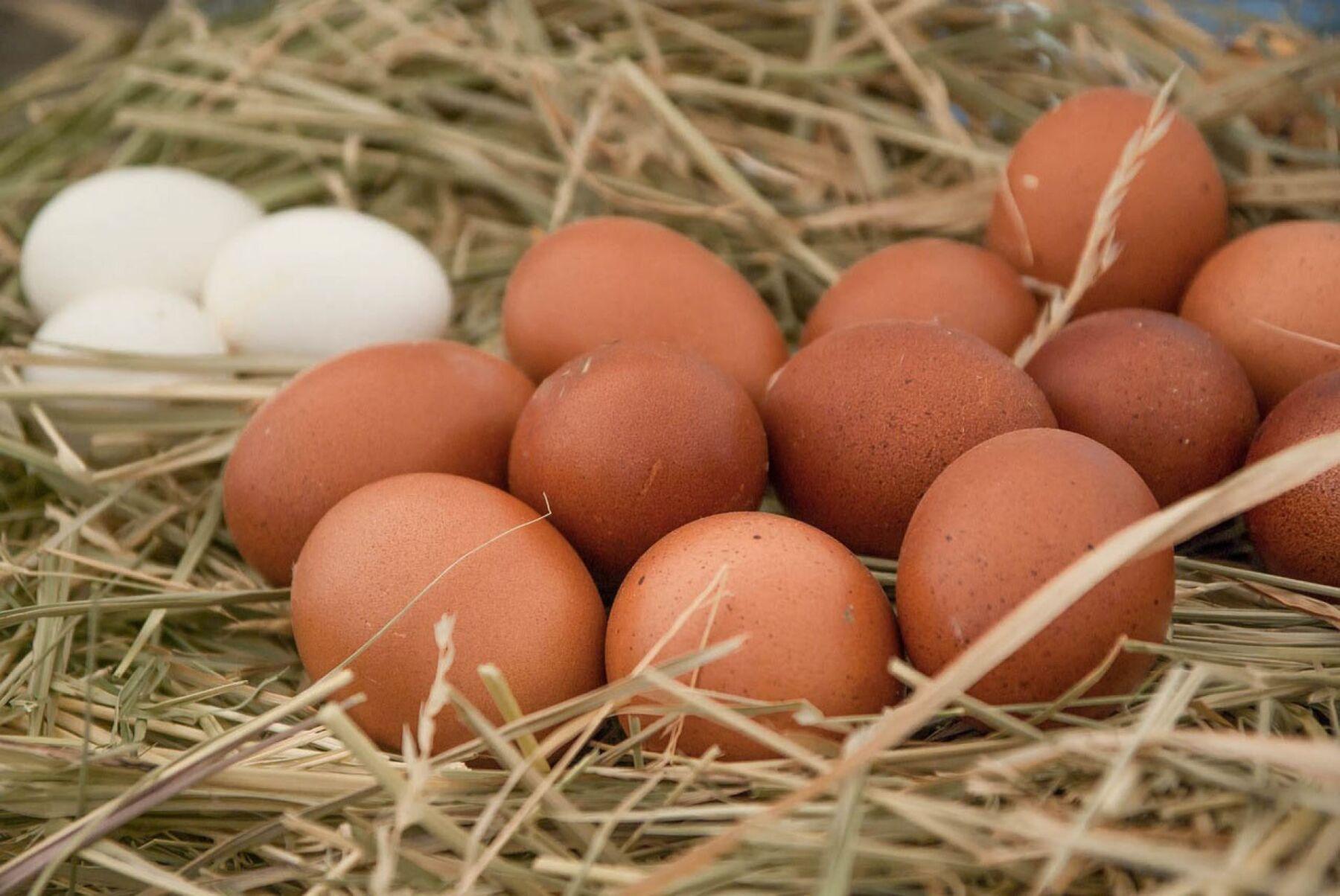 Infalción INEGI huevo