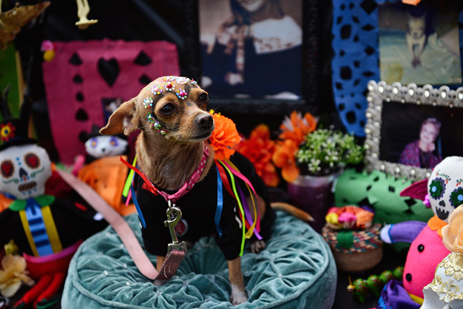 Haute Dog Howl'oween Parade