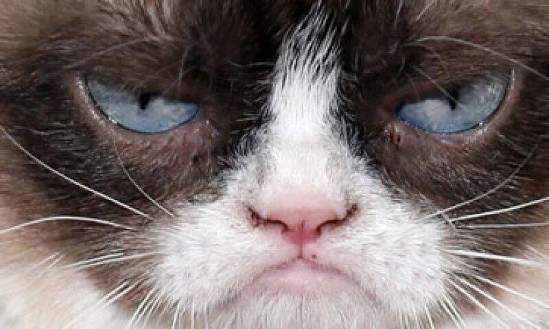 Grumpy Cat es uno de los gatos más conocidos en la web. (Foto: Getty Images)