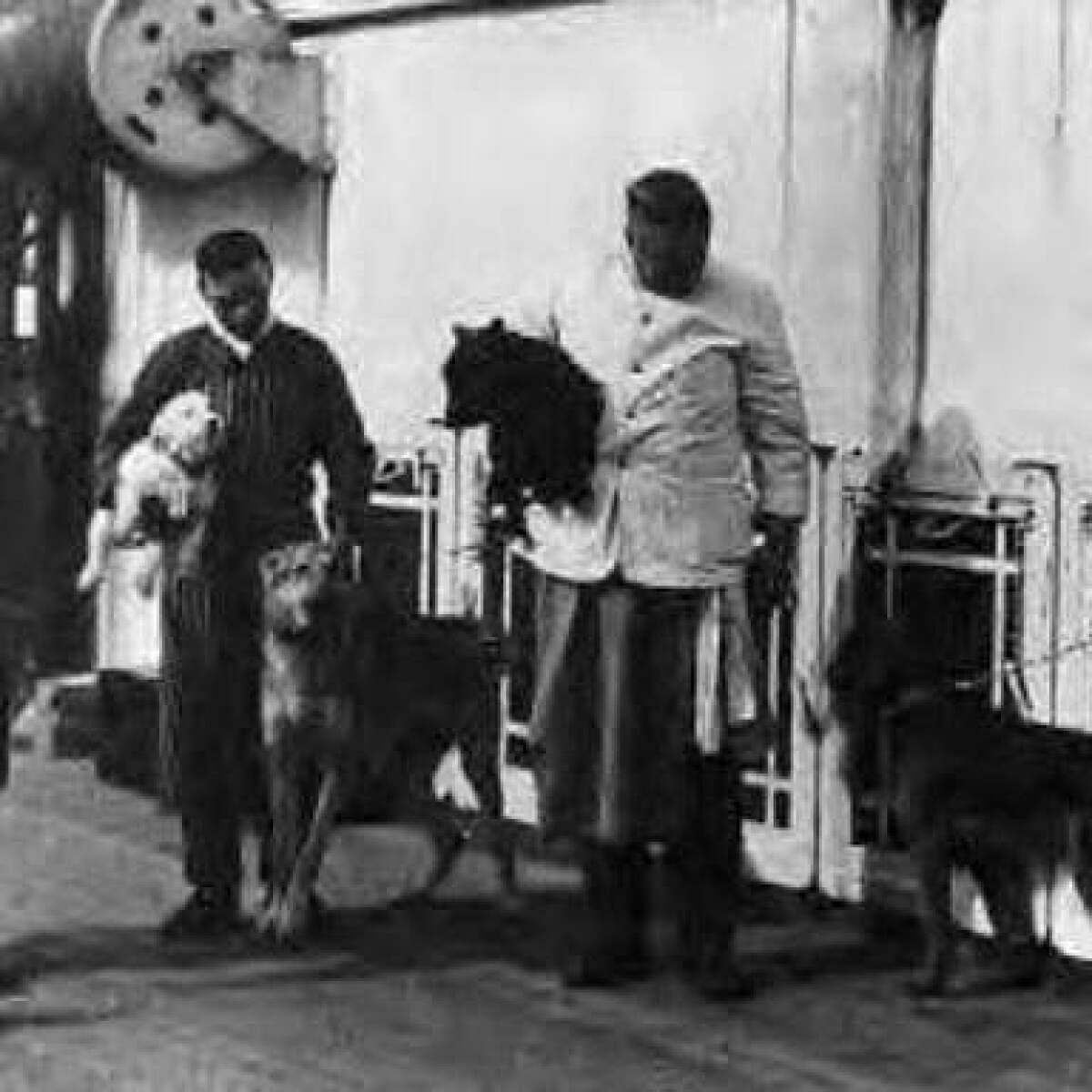 Resultado de imagen para perros titanic