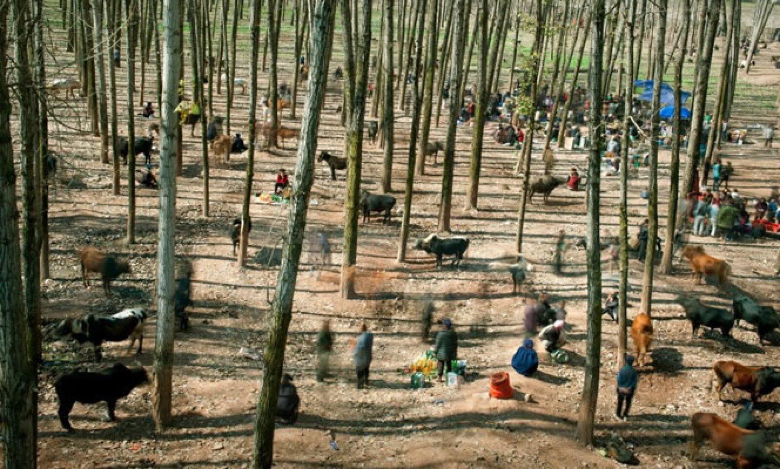 Gente se reúne en un mercado de ganado y caballos en una localidad de China. Autor: Cai Sheng Xiang. Categoría: Vida Cotidiana