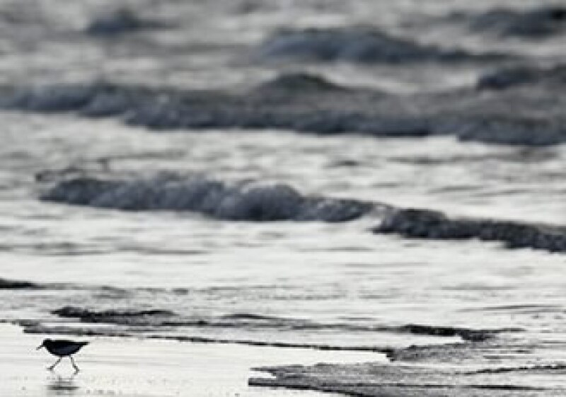 Las especies animales ya resienten el daño en su ecosistema por el derrame petrolero. (Foto: AP)