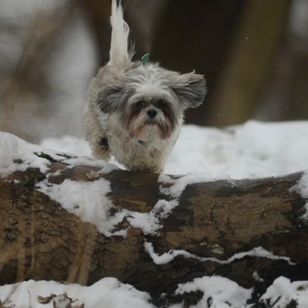ireport mascotas nieve EU 03