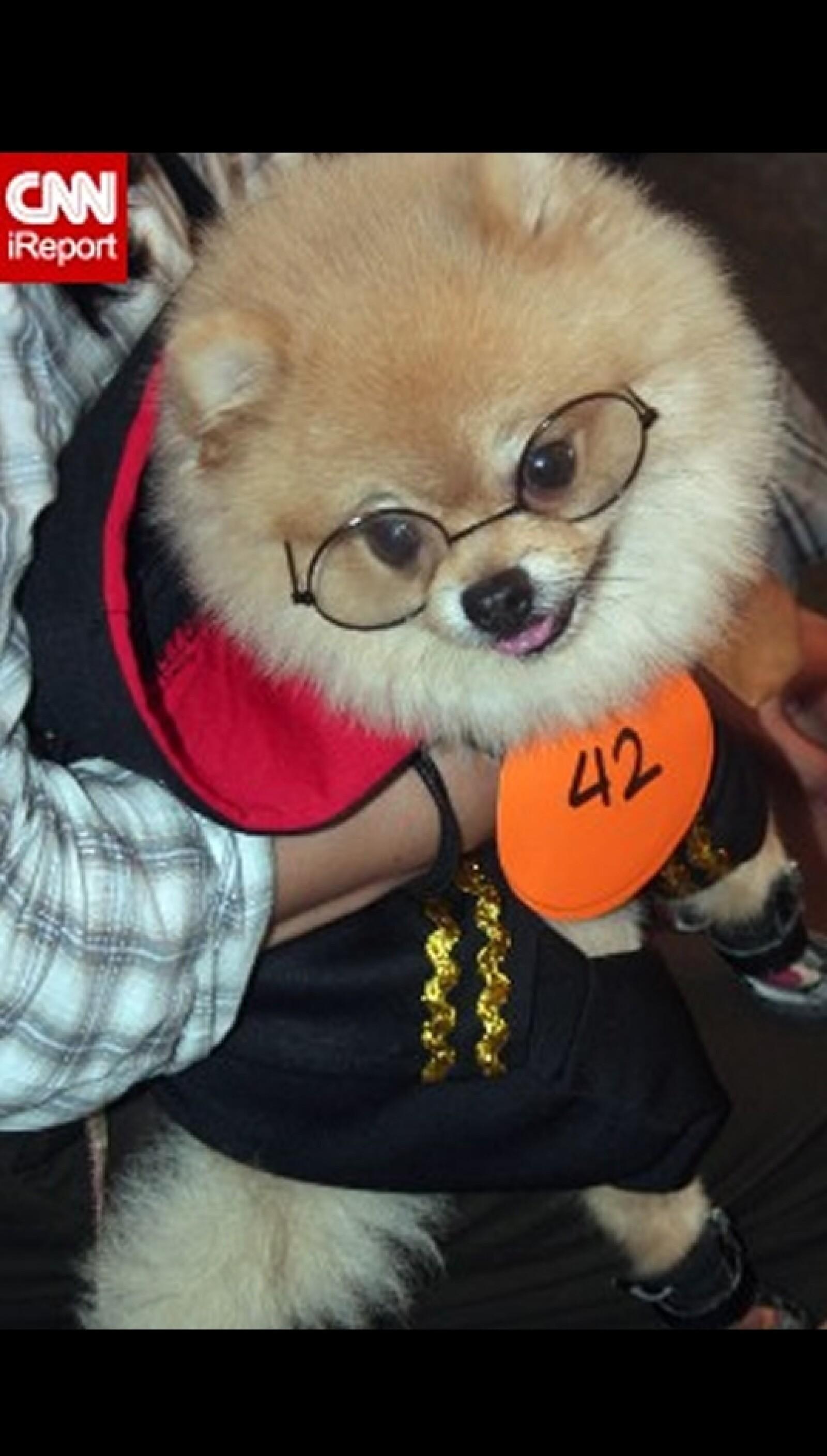 perros disfraz Halloween