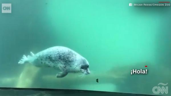 foca y mariposa