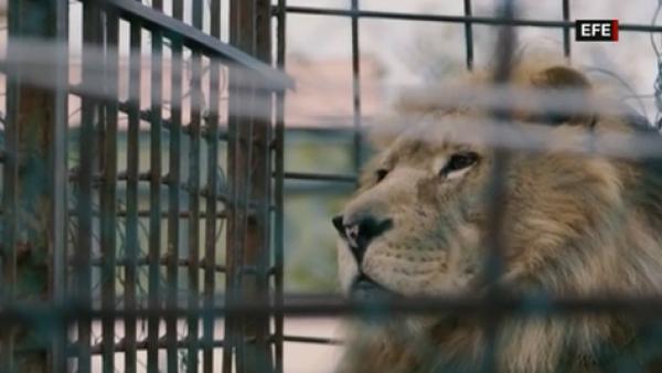 ONG rescata a estos animales que vivían en pésimas condiciones en un zoológico