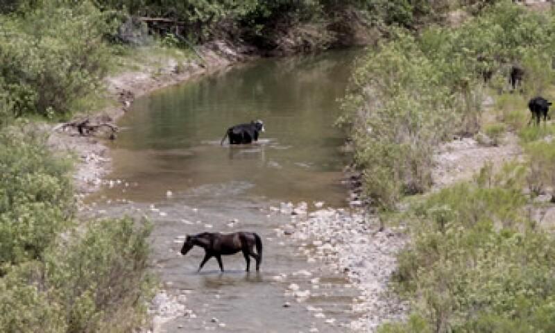 La Conafor valoró el daño de la flora y fauna en el río sonorense. (Foto: Notimex)