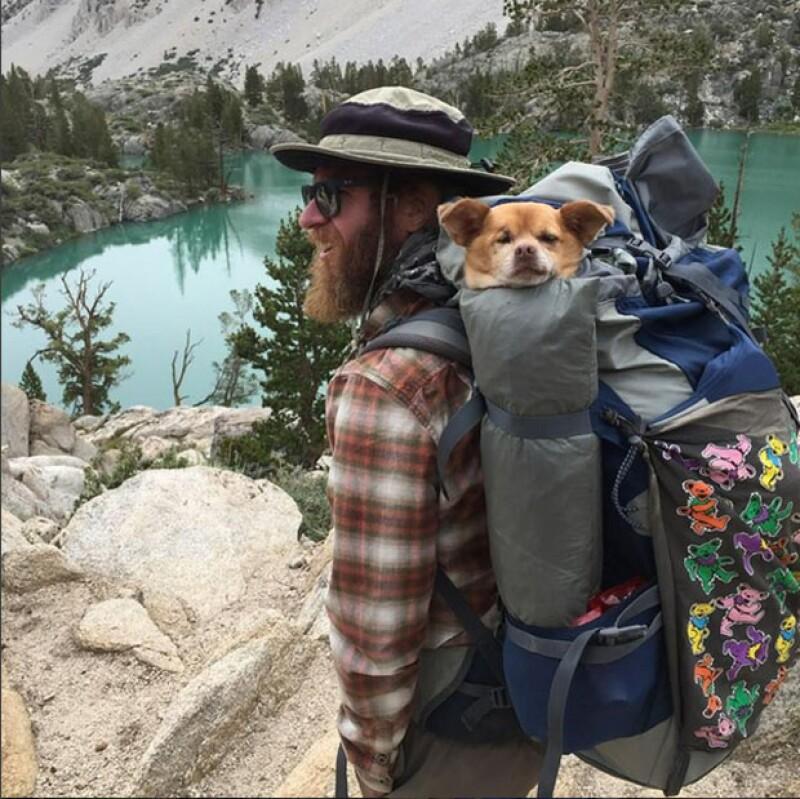 Las nuevas fotos imperdibles en la red social tienen que ver con aquellos dueños que se llevan a sus amigos caninos a sus aventuras en el campo o en el bosque. Aquí nuestra selección de instantáneas.