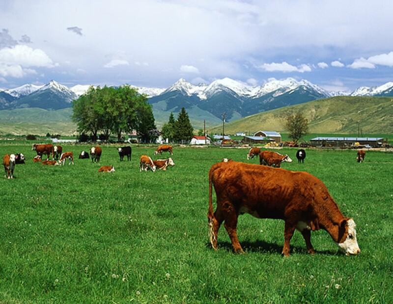 Es recomendable comer proteína animal orgánica.
