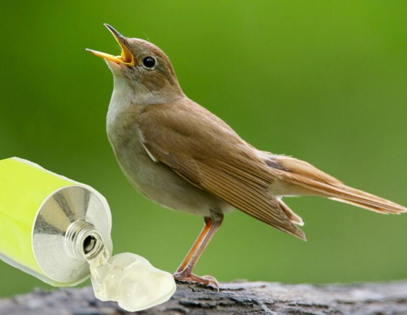 Los deshechos más usados de pájaro son los del ruiseñor.