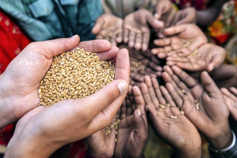 5 causas de la crisis alimentaria mundial