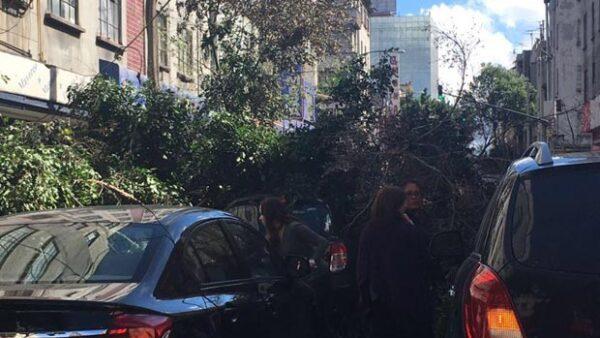 Un árbol que se cayó por los fuertes vientos que han azotado a la Ciudad de México por poco cae encima del auto de la cantante.