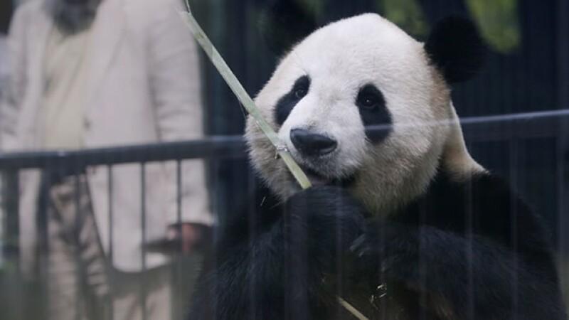 panda shin shin tokio japon