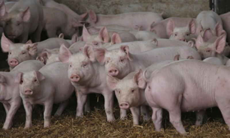 El principal importador de cerdo mexicano es Japón, con 86% del total. (Foto: Getty Images)