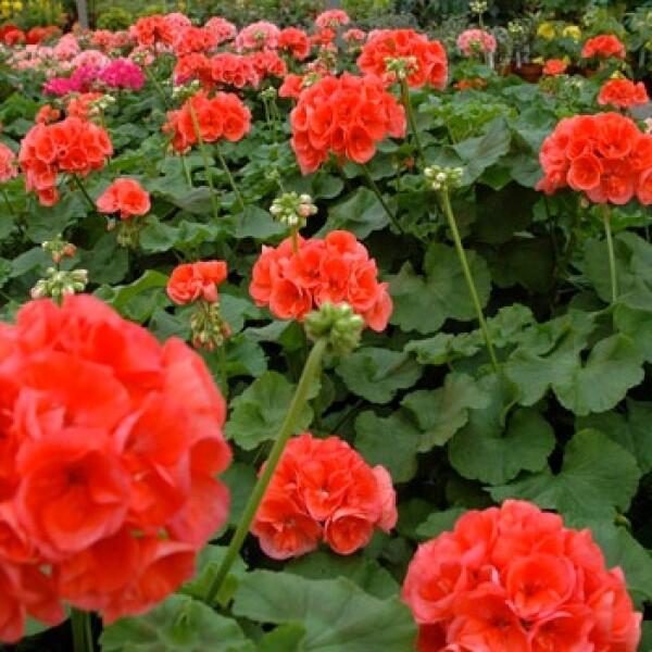 flores flor flower