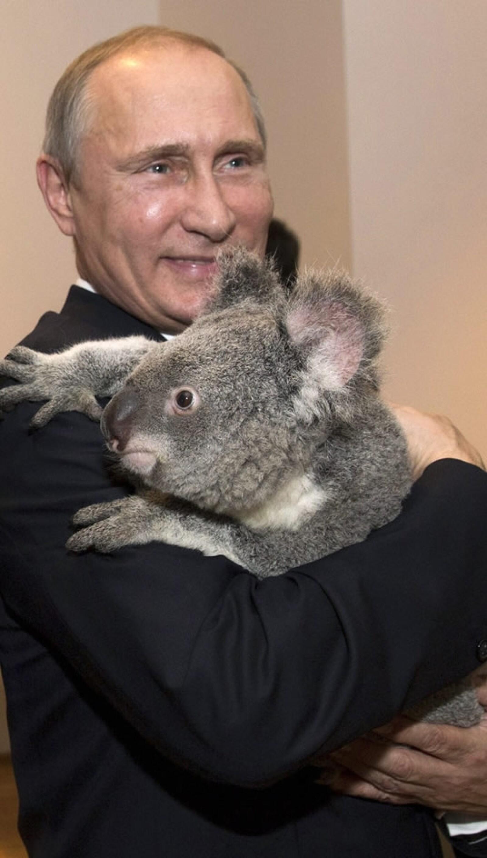 putin, koala, australia, G20