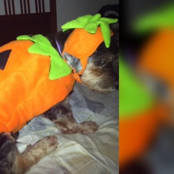 irpt-mascota-halloween3