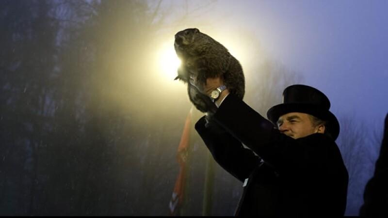 Marmota meteorologa Phil
