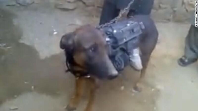 perro_secuestrado_taliban