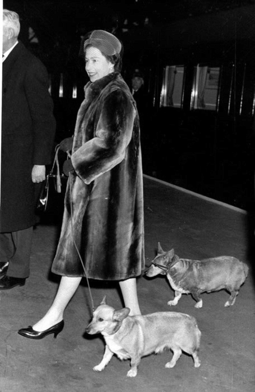 La Reina Isabel II no oculta su amor por una raza en particular, los Corgis. En Palacio, sus mascotas reciben un trato especial y tienen chefs que les preparan alimentos frescos.