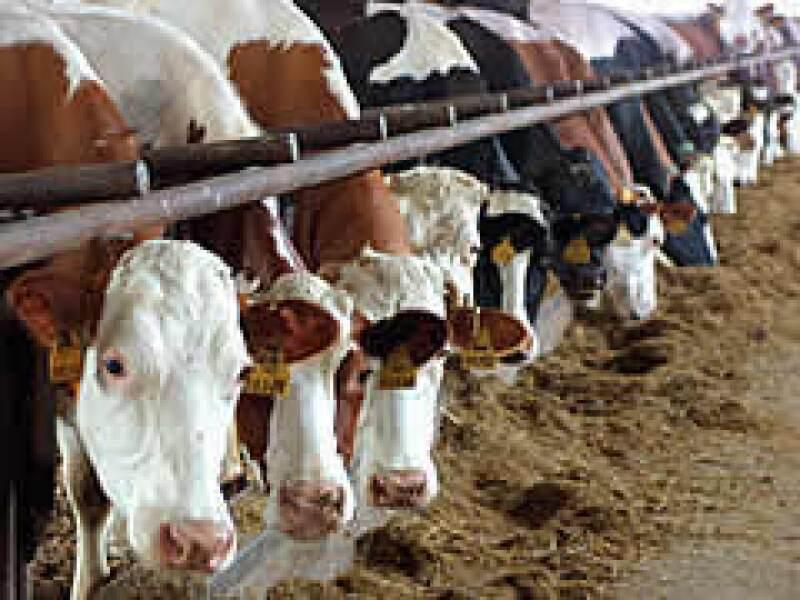 Sequías, inundaciones y clonación de vacas cambiarán radicalmente los alimentos, según el futurólogo Timothy Mack.