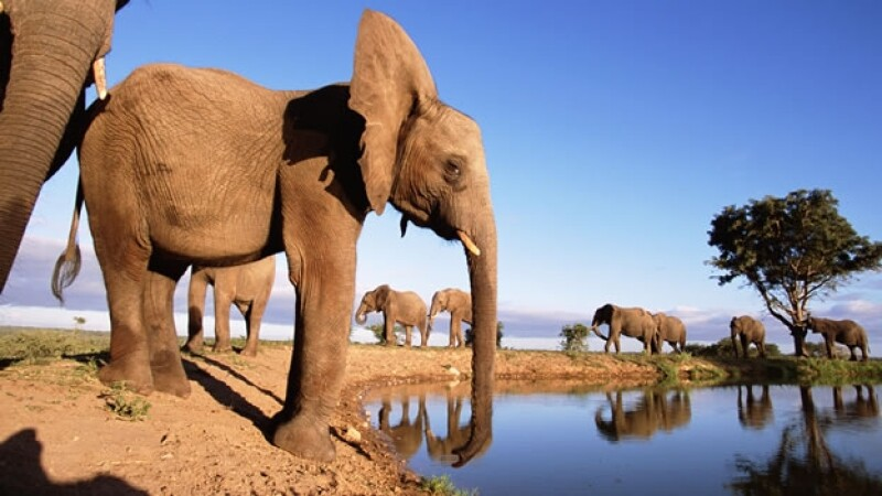 elefantes africa especies sabana