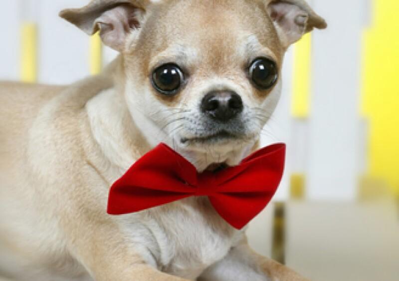 Paris Hilton creó una empresa de ropa exclusiva para perros que quieren vivir como estrellas de Hollywood. (Foto: Photos to go)