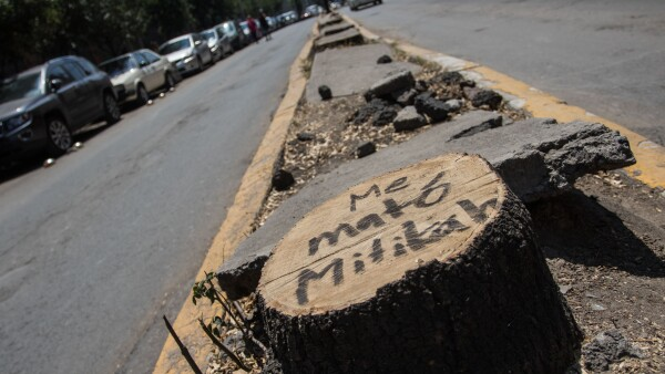 tala de árboles CDMX