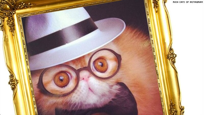 gato, instagram