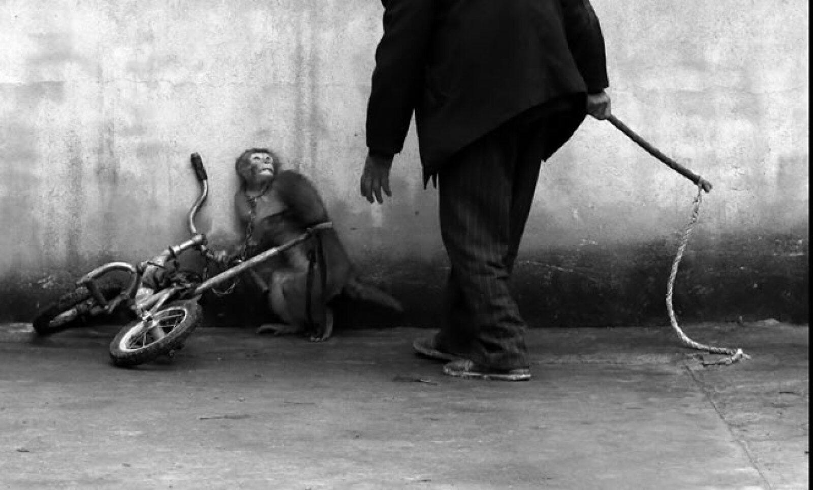 Un mono se enconge cuando su domador se acerca durante el entrenamiento en un circo de Suzhou, provincia de Anhui, China. Su autor, Yongzhi Chu, ganó en la categoría Naturaleza.