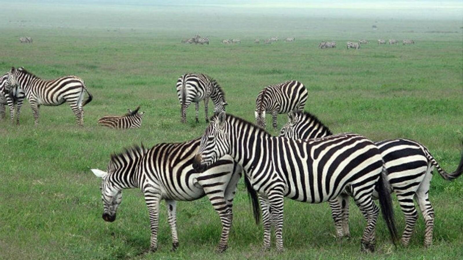 Tanzania: Take a ride on the wild side elefante cebra