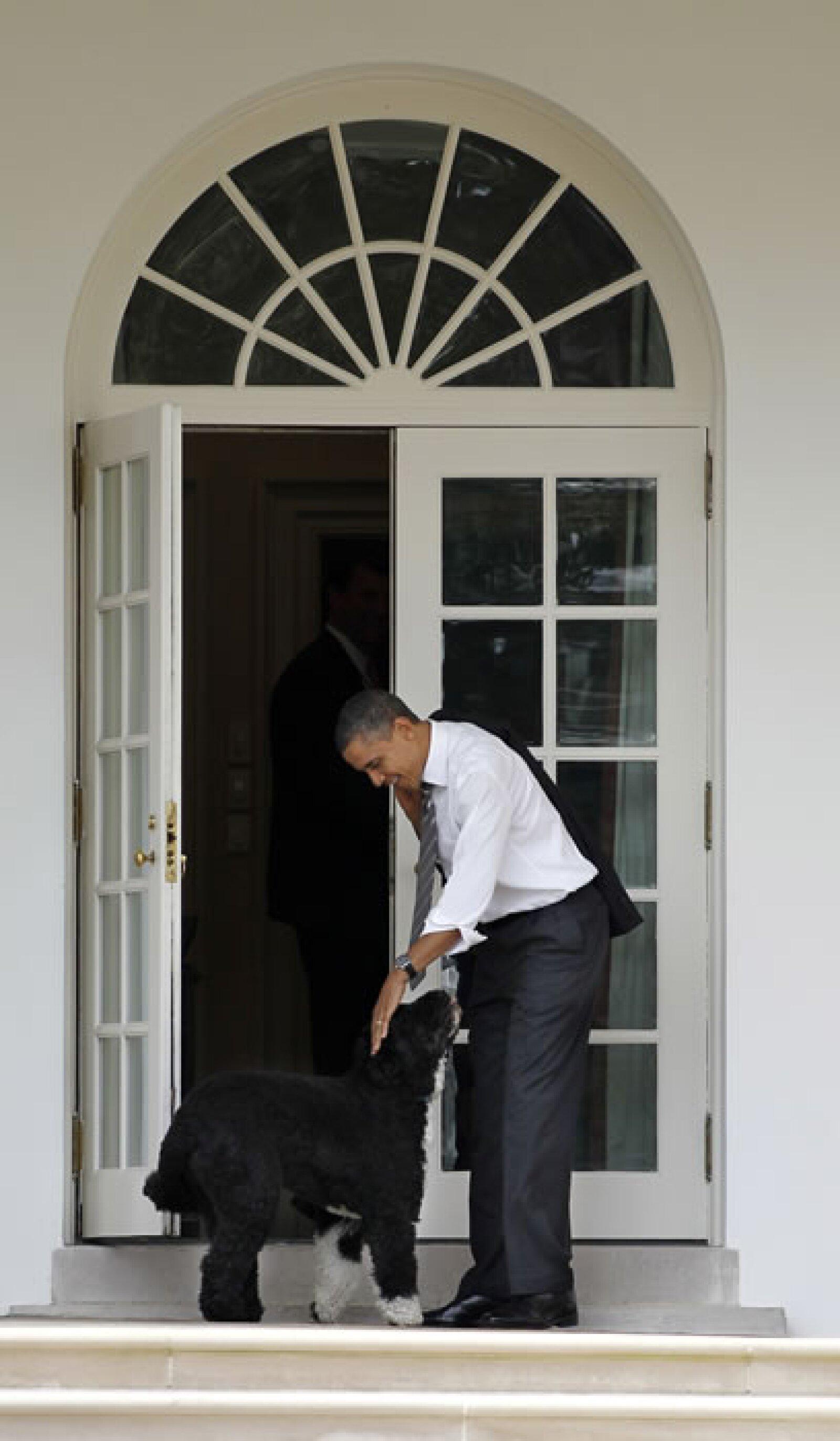 Bo, el perro de los Obama, es conocido por ser un compañero inseparable del Presidente.