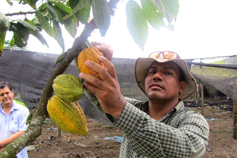 La mayor�a de los productores de cacao nunca hab�an probado el chocolate a partir de sus propios granos.