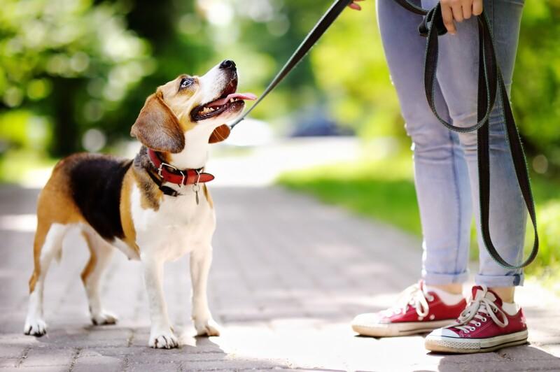 ¿Buscas a alguien que cuide a tu mascota?