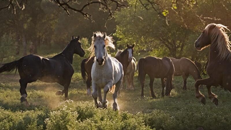 wild horses caballo salvaje