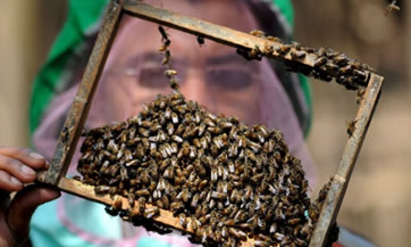La empresa negó que haya un vínculo entre sus semillas de soja y los problemas de la producción de miel. (Foto: EFE )