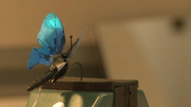 mariposa robot desarrollada por microsoft