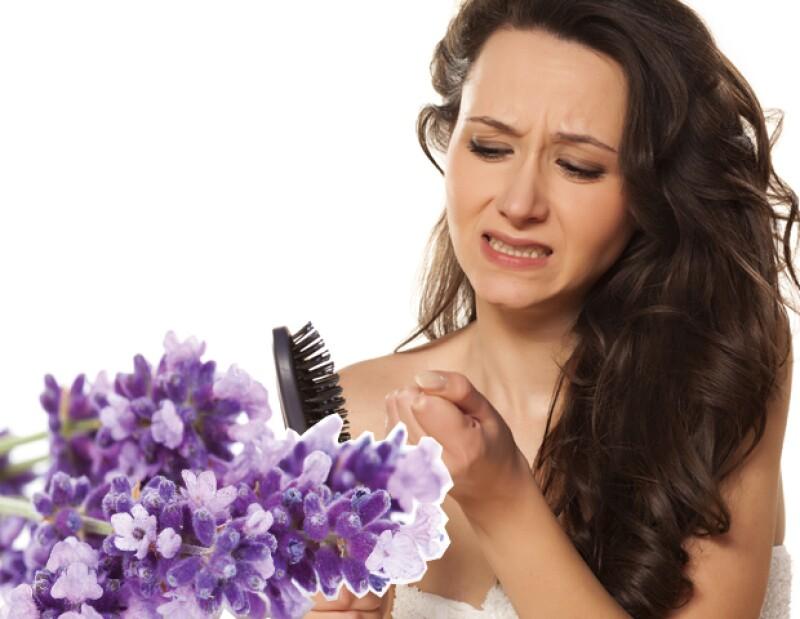 La lavanda puede previr la caída del pelo.