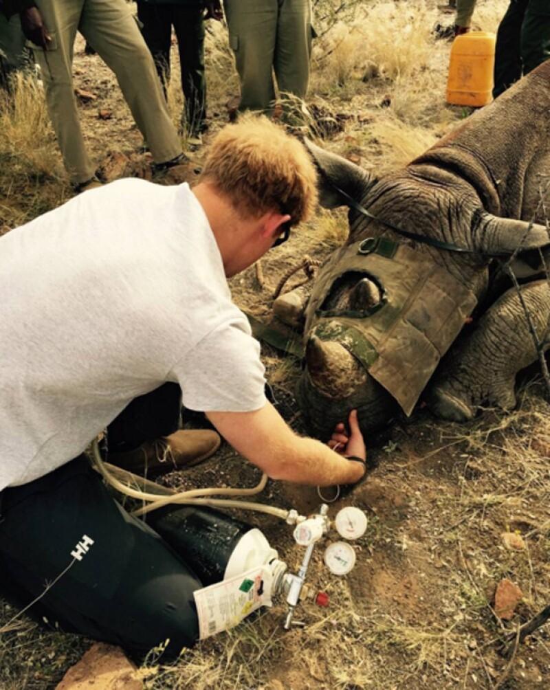 Harry asistió a los rinocerontes.