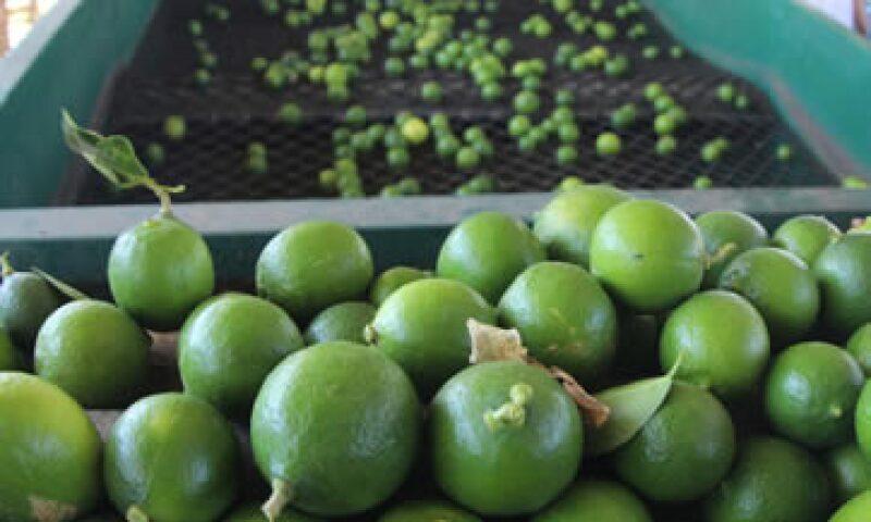 El precio del limón tuvo un alza de 221.76% de diciembre a la primera quincena de marzo. (Foto: Notimex)